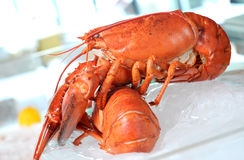 Delicious lobster. For dinner today Royalty Free Stock Photo
