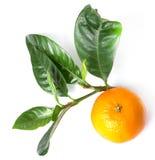 Delicious mandarin Stock Photos