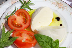Delicious mozzarella cheese Royalty Free Stock Images