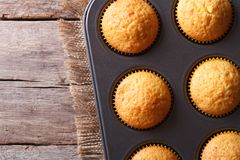 Delicious muffins in baking dish top view horizontal Stock Images