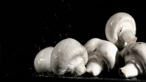 Delicious mushrooms in super slow motion being soaked stock video