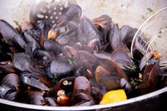 Delicious mussels in a large frying pan, street food. Seafood. Mussels in a large frying pan. Street food. Clams in the shells. Delicious snack for gourmands stock images