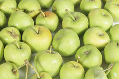 Delicious noncommercial variety of small green apples Royalty Free Stock Image
