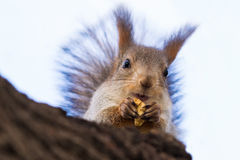 Delicious nut Stock Photo