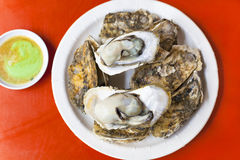Delicious and nutrition sea food  ,barbecue Oysters with mustard Royalty Free Stock Photo