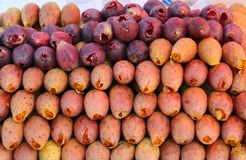 Delicious Organic Prickly Pears Cactus Fruits in order and ready to sale royalty free stock photo