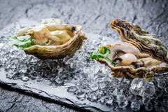 Delicious oyster in shell Stock Photos