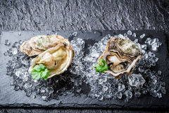 Delicious oyster in shell on crushed ice Stock Photo