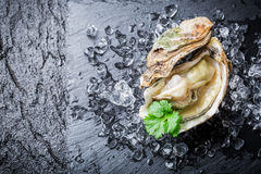 Delicious oyster in shell on ice Royalty Free Stock Image