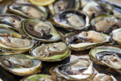 Delicious oysters Stock Photography