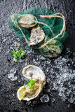 Delicious oysters on crushed ice ready to eat Royalty Free Stock Photos