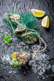 Delicious oysters on ice with lemon. On black rock Royalty Free Stock Image