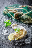 Delicious oysters with lemon Royalty Free Stock Photo