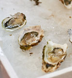 Delicious oysters at market. Detail of delicious oysters in a market in italy Royalty Free Stock Images