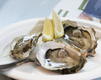 Delicious oysters at market. Detail of delicious oysters in a market in italy Royalty Free Stock Image