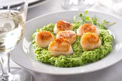 Pan Seared Scallops. Delicious pan seared scallops on pureed peas with thyme stock images