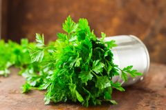 Delicious Parsley sprigs in a brown wicker basket and wooden board. Garden parsley herbs. Organic effective source of anti-oxidant. Parsley sprigs in a brown royalty free stock image