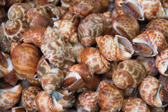 Delicious pattern of Shellfish snails  background Royalty Free Stock Images