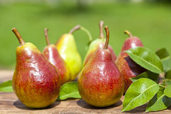 Delicious Pears  Stock Photo