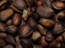 Delicious pine nuts. The delicious pine nuts closeup stock photos