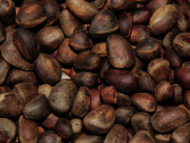 Delicious pine nuts. The delicious pine nuts closeup royalty free stock images