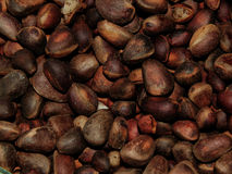 Delicious pine nuts. The delicious pine nuts closeup stock images