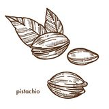 Delicious pistachio in shell with couple of leaves Royalty Free Stock Image