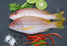 Delicious portion of fresh fish fillet with aromatic herbs spice. S and vegetables healthy Royalty Free Stock Photography
