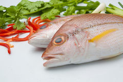 Delicious portion of fresh fish fillet with aromatic herbs spice. S and vegetables healthy Stock Photography