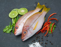 Delicious portion of fresh fish fillet with aromatic herbs spice. S and vegetables healthy Stock Images