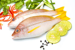 Delicious portion of fresh fish fillet with aromatic herbs spice. S and vegetables healthy Stock Photos