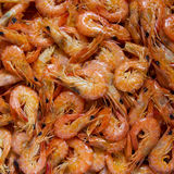 Delicious prawn Royalty Free Stock Photography