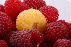 Delicious raspberries Stock Photography