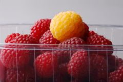 Delicious raspberries Stock Image