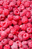 Delicious raspberries Royalty Free Stock Images