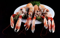 Delicious Raw Langoustines Stock Photography