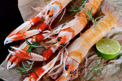 Delicious Raw Langoustines Royalty Free Stock Images