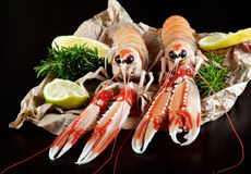 Delicious Raw Langoustines Stock Photo