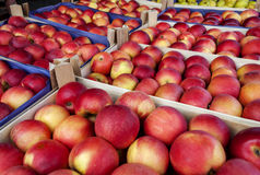Delicious red apples in supermarket Stock Image