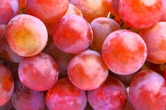 Delicious red grapes Royalty Free Stock Images