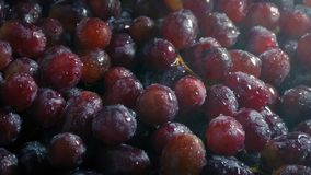 Juicy Grapes Getting Sprayed With Fine Mist. Delicious red grapes are watered to be kept fresh stock video
