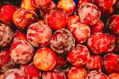Delicious red plums in market stock photo