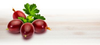 Delicious red prickly red currants Ribes hirtellum - Rode Goose royalty free stock photography