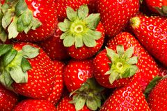 Delicious red strawberries royalty free stock photo