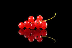 Free Delicious Redcurrants Stock Images - 20653274