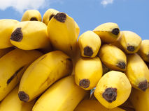 Delicious Ripe Bananas. A bunch of delicious ripe bananas on sky background Royalty Free Stock Photos