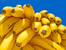 Delicious Ripe Bananas. A bunch of delicious ripe bananas on blue sky background Stock Images