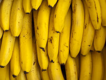 Delicious Ripe Bananas. Bunches of delicious ripe bananas Stock Images