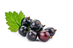 Delicious ripe black currant on a white background. Stock Photo