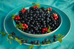 Delicious ripe blueberries in a blue Cup is on the  table Stock Photography